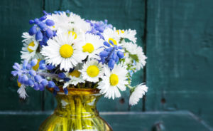 Daisies, grape hyacinth and forget-me-not, spring bouquet in front of wood
