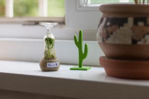 Ein kleines Biotop auf der Fensterbank