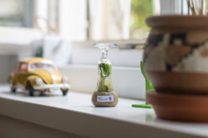 A small biotope on the windowsill