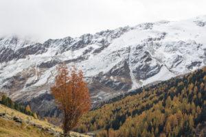 Beschneite Berge und herbstlich gefärbte Wälder im Obervinschgau