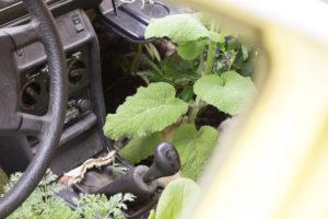 Urban Gardening, alte Autos in denen es blüht und wächst.