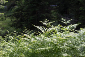 Wild plants on the edge of the forest