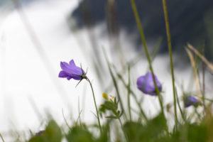 Blumen in hochalpinem Gelände