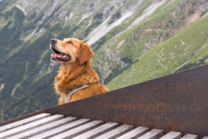 Hund mit rötlichem Fell in den Bergen