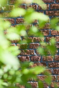 Old red brick wall, leaves in the foreground, blur,