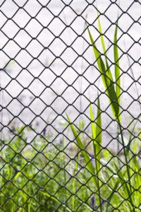 Fence, nature, grass, close-up,