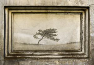 Building, wall, mural, framework, house, facade, weathered, old, in need of renovation, run down, cracks, image, wall, mural, tree, solitary tree, alone, detached,