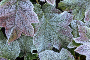 Natural Science, Small depth of sharpness, frost on plants
