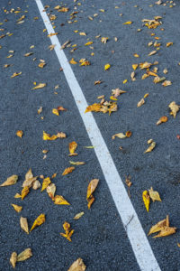 Natural Science, Autumn fallen leaves on the highway