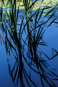 Natural Science, Growing reeds reflected in water
