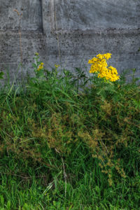 Natural Science, Grass growing near the concrete fence