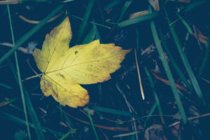 Leaf, yellow, fallen, close-up