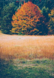 Meadow, grasses, forest, autumn, colourful