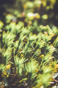 Waldboden, grün