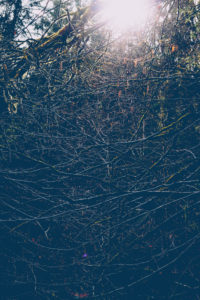 Branches, backlight