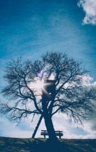 Baum, Gegenlicht