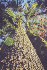Baum, Froschperspektive