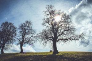Bäume, Gegenlicht