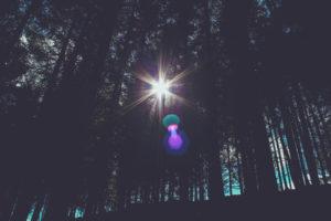 Wald, Gegenlicht