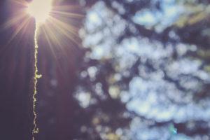 Tree trunk, sun, backlight
