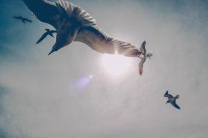 Heavens, seagulls