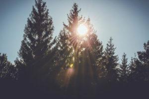 Trees, sun rays