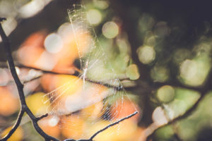 Tree branches, detail, spider web