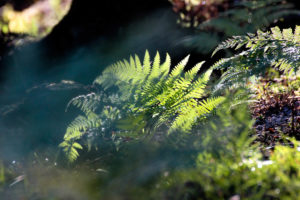 Forest floor, fern