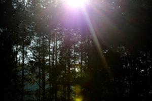 Forest, back light