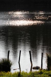 Lake, water surface, glitter