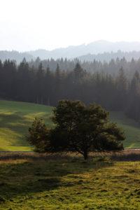 Germany, Bavaria, Mittenwald