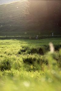 Germany, Bavaria, Mittenwald, meadow, back light