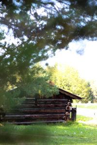 Forest, hut