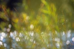 Lake, reeds, glitter, reflection