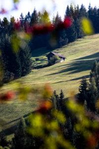 Germany, Bavaria, Mittenwald, meadow, hill, hut