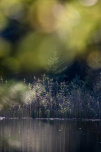 Lake, forest, blur