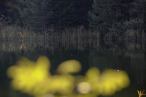Lake, forest, foliage, blur