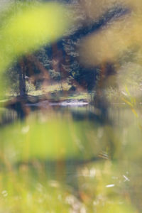 Wald, See, Badestelle, Ufer
