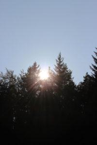 Bäume, Sonnenstrahlen