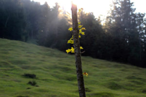 Forest, meadow, tree, back light, leaves