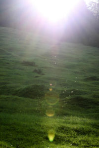 Meadow, back light, mosquitos