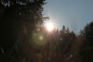 trees, back light
