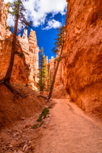 USA, Utah, Garfield County, Bryce Canyon National Park, Canyon am Navajo Loop Trail