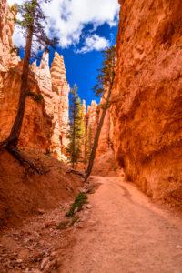 USA, Utah, Garfield County, Bryce Canyon National Park, Canyon on the Navajo Loop Trail