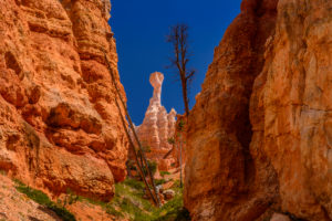 USA, Utah, Garfield County, Bryce Canyon National Park, Amphitheater am Queens Garden Trail
