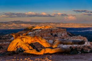 USA, Utah, Garfield County, Bryce Canyon National Park, Deadwood at Sunrise Point