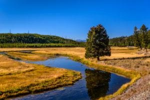USA, Wyoming, Yellowstone National Park, Madison, Madison River Valley