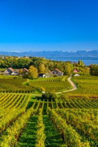 Germany, Baden-Württemberg, Lake Constance, Hagnau am Bodensee, foreground Winery Aufricht, Stetten, view from Kriegsgräberstätte Lerchenberg