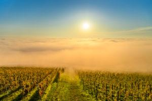 Germany, Baden-Württemberg, Lake Constance, Meersburg, vineyards near Meersburg, view from the Wetterkreuz