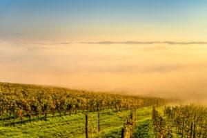 Germany, Baden-Württemberg, Lake Constance, Meersburg, vineyards near Meersburg, view from the mountain trail near Wetterkreuz